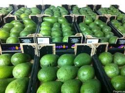 Авокадо из Испании