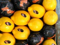 Фрукты и овощи из Испании. Прямые поставки - фото 8