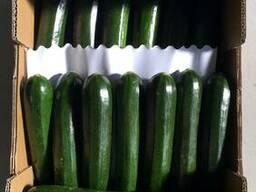 Кабачок Цуккини от производителя Испания. Calabacin negro. - фото 1