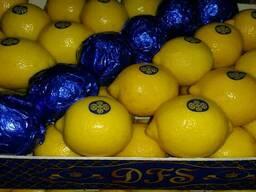 """Лимон """"Primofiori"""" с Испании"""