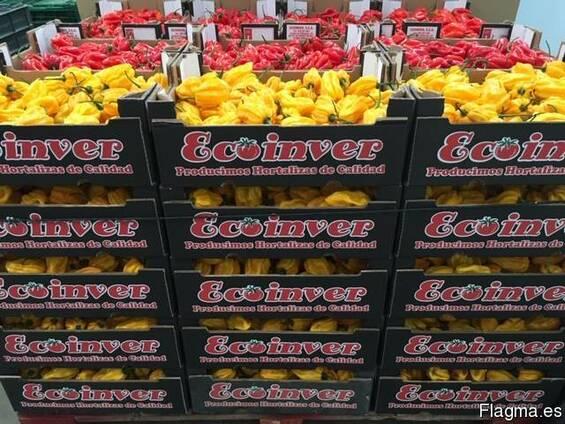 Перец острый сорт Хабанеро. Испания -Ecoinver Export