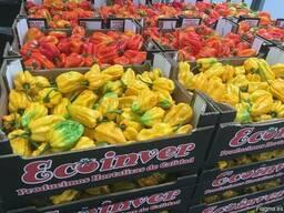 Перец острый сорт Хабанеро. Испания -Ecoinver Export - фото 4