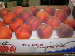 Персики и нектарины из Испании. Прямые поставки.