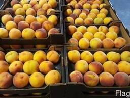 Персики и нектарины оптом из Испании - фото 4