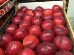 Персики и нектарины оптом из Испании - фото 5