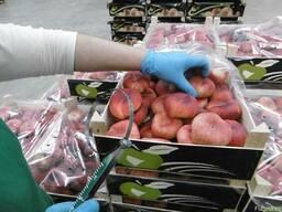 Плоский персик парагвайо.Прямые поставки из Испании
