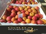 Продаем абрикосы из Испании - фото 4