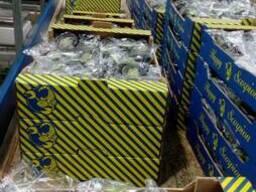 Продаем баклажаны - фото 5