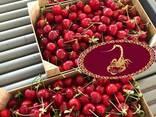 Продаем черешню из Испании - фото 3
