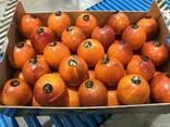 Продаем сангинели из Испании - фото 2