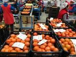 Продаем томаты - фото 3