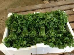 Продаем зелень - фото 4