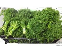 Продаем зелень - фото 5