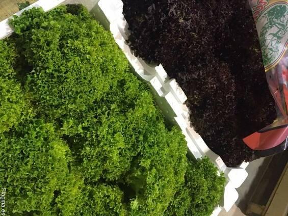 Салаты листовые, аромат. зелень из Испании. Прямые поставки .