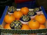 Апельсины. - фото 1