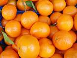 Апельсины - photo 1