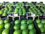 Авокадо из Испании - фото 1