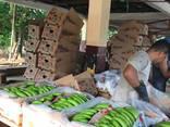 Бананы. Прямые поставки из Эквадора банана Кавендиш. - photo 4