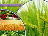 Fabricante y proveedor de pesticidas a nivel mundial - photo 3