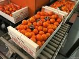 Фрукты и овощи оптом. Прямые поставки из Испании. - фото 6