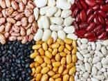 beans - photo 1