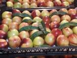 Нектарин и персик - photo 1