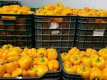 Перец сладкий Калифорниа, Ламуйо, Рамиро, Чили, Капиа - фото 2