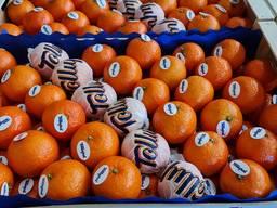 Предлагаем оптовые поставки мандаринов из Испании