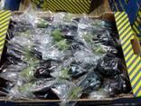 Продаем баклажаны - фото 4