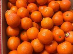 Продаем испанские мандарины