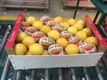 Продаем лимон - фото 6