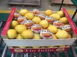 Продаем лимон - фото 1
