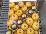 Продаем лимон - фото 7