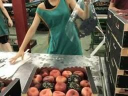 Продаем парагвайский персик - photo 2