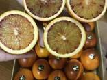Продаем сангинели из Испании - фото 3