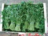 Продаем зелень - фото 1