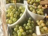 Виноград - фото 1