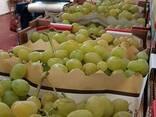 Виноград из Испании. Прямые поcтавки. - photo 3