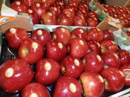 Яблоки. Испанские яблоки, прямые поставки от производителя.
